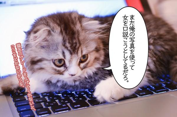 俺の口説きを邪魔する猫ちゃん