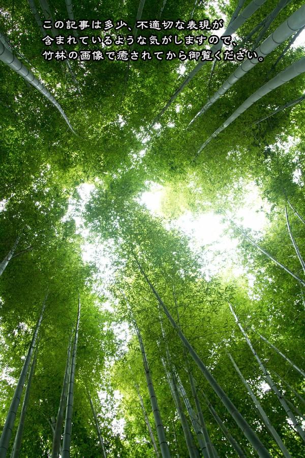 竹林の癒やし画像