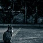 何かを見上げる猫