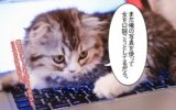 【メール術】ネタ写真を準備しておけば、いくらでも再利用できるので便利。【LINEでも。】