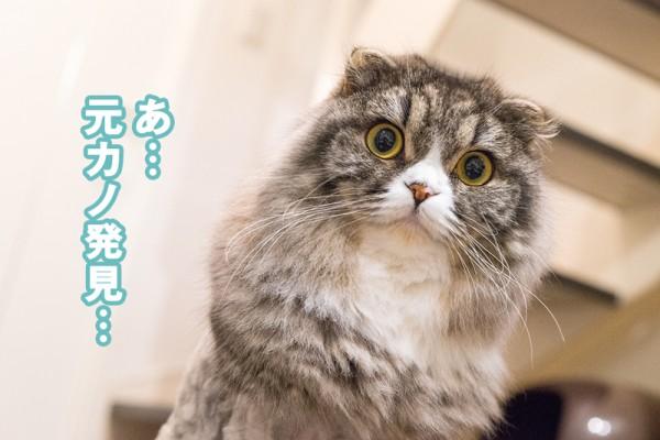 元カノを見つけた猫