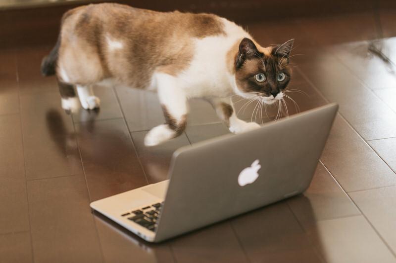 メールをしそうでしない猫